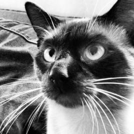 treat face cat