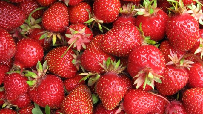 strawberries_fractl-mf