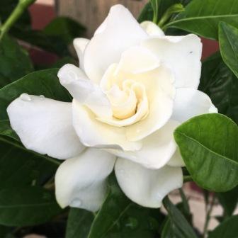 my-mini-magnolia-©AimeeMcEwen