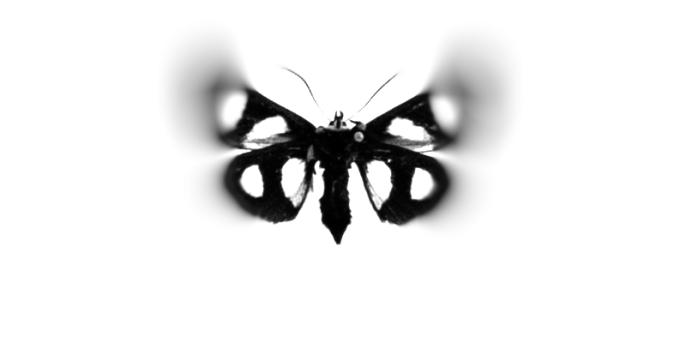 blurryfly